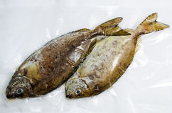 Fresh sea fish. Soup or fry Royalty Free Stock Photo