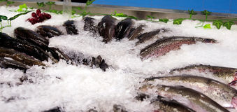Fresh sea fish trout on ice. Photo toned Royalty Free Stock Photography