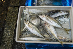 Fresh sea fishes in boxes in fish market, tokyo Stock Photography