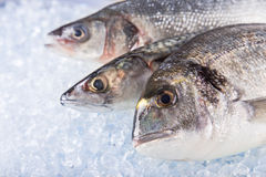 Fresh sea fishes on crushed ice. Royalty Free Stock Photos