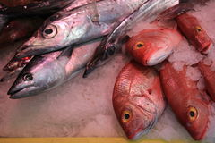 Fresh sea fishes on crushed ice. In a fish shop Stock Photos