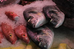 Fresh sea fishes on crushed ice. In a fish shop Stock Photo