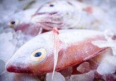 Fresh sea fishes on crushed ice. Fresh raw  sea fishes on crushed ice Royalty Free Stock Photos