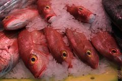 Fresh sea fishes on crushed ice. In a fish shop Stock Images