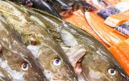 Fresh  sea fishes on crushed ice. Fresh raw sea fishes on crushed ice Royalty Free Stock Photography