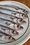 Fresh sea fishes on the plate Stock Images