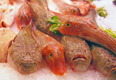 Fresh sea fishes at seafood market Stock Photos