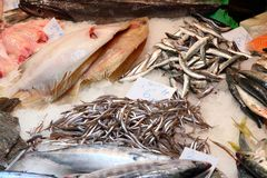 Fresh sea food. Fish market in Barcelona, Spain. Fresh sea food of La Boqueria Stock Image