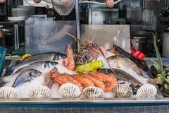 Fresh sea food. Inthe ice in restaurant i Rethymno  on Crete island , Greece , Europe Royalty Free Stock Photography