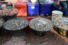 The fresh sea food Royalty Free Stock Photo