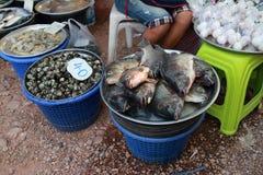 The fresh sea food Royalty Free Stock Image
