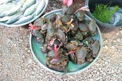The fresh sea food Stock Photos
