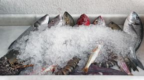 Fresh sea food for sell display on ice. At Mykonos, Greece Royalty Free Stock Photo