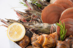 Fresh sea food set Royalty Free Stock Images