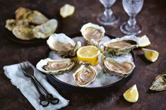 Fresh sea oysters on a large sea salt with lemon. Healthy food, gourmet food, restaurant food. Food stock photography