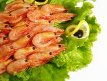 Fresh sea prawns Stock Photos