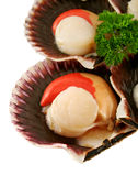 Fresh Sea Scallops Royalty Free Stock Images