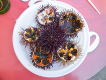 Fresh sea urchin. Royalty Free Stock Images