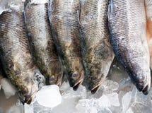 Fresh Seabass Stock Image