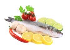 Fresh seabass fish. Stock Photos