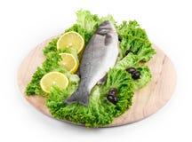 Fresh seabass fish on lettuce. Stock Photography