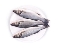 Fresh seabass fish on plate Royalty Free Stock Images