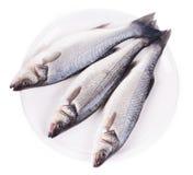 Fresh seabass fish on plate Stock Photo
