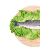 Fresh seabass fish tail on lettuce. Royalty Free Stock Image