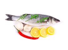 Fresh seabass fish. Royalty Free Stock Photography