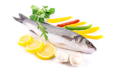 Fresh seabass fish. Royalty Free Stock Photo