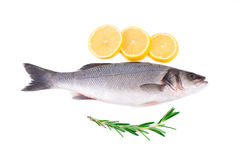 Fresh seabass with lemon Royalty Free Stock Photo