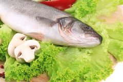 Fresh seabass on platter with lettuce. Whole background Stock Photography