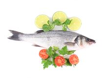 Fresh seabass with tomatoes and basil. Stock Image