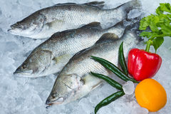 Fresh Seabass and vegetables Stock Images