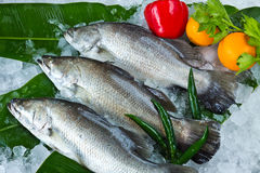 Fresh Seabass and vegetables Royalty Free Stock Image