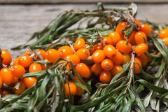 Fresh seabuckthorn on the table. Fresh seabuckthorn on the vintage wooden table royalty free stock images