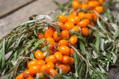 Fresh seabuckthorn on the table. Fresh seabuckthorn on the vintage wooden table Royalty Free Stock Photography