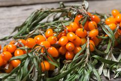 Fresh seabuckthorn on the table. Fresh seabuckthorn on the vintage wooden table royalty free stock photos