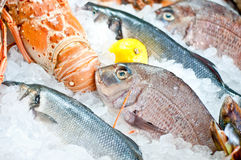 Fresh seafood. Close-up image of fresh seafood displayed on the market Stock Photo