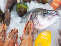 Fresh seafood. Photographed in a fish-market Stock Photo