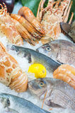 Fresh seafood. Photographed in a fish-market Stock Images