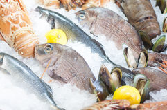 Fresh seafood. Photographed in a fish-market Royalty Free Stock Photos