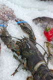 Fresh seafood Royalty Free Stock Images