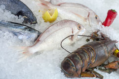 Fresh seafood Royalty Free Stock Image