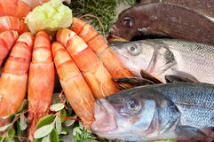Fresh seafood. Arrangement displayed in market Royalty Free Stock Photography