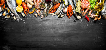 Fresh Seafood. Stock Images