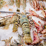 Fresh seafood arrangement displayed in market, ready to cook. Royalty Free Stock Images