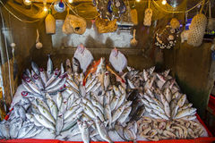 Fresh seafood arrangement in market. Many seafood kinds Royalty Free Stock Images