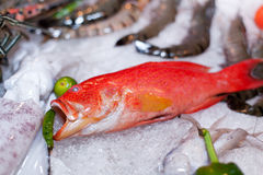 Fresh seafood in asian market. Lobsters prawns and fish Royalty Free Stock Photo