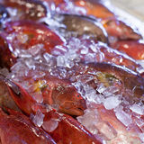 Fresh seafood in asian market. Lobsters prawns and fish Royalty Free Stock Photos